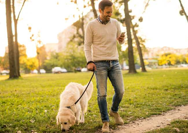 Smiling man, walking in the park with a golden retriever looking at smartphone